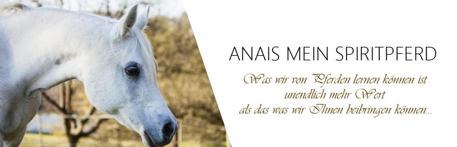 Anais_web