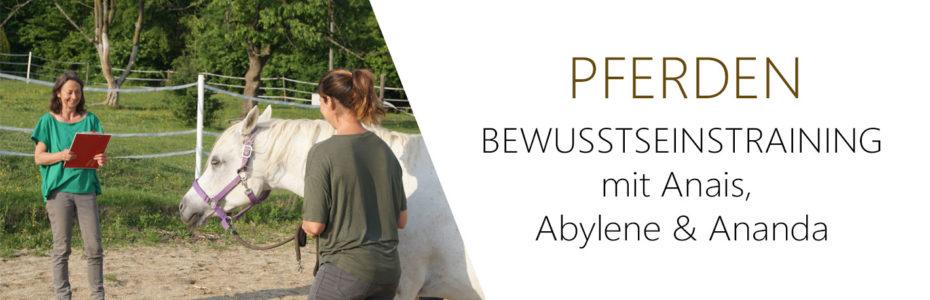 Banner_Pferden4